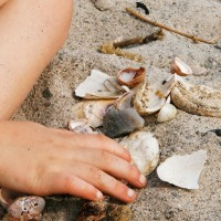 april12seashells