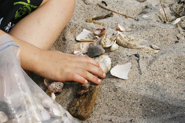 little hand seashells