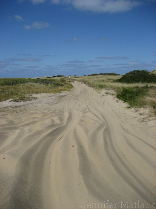 Favorite Beach: Eel Point, Nantucket
