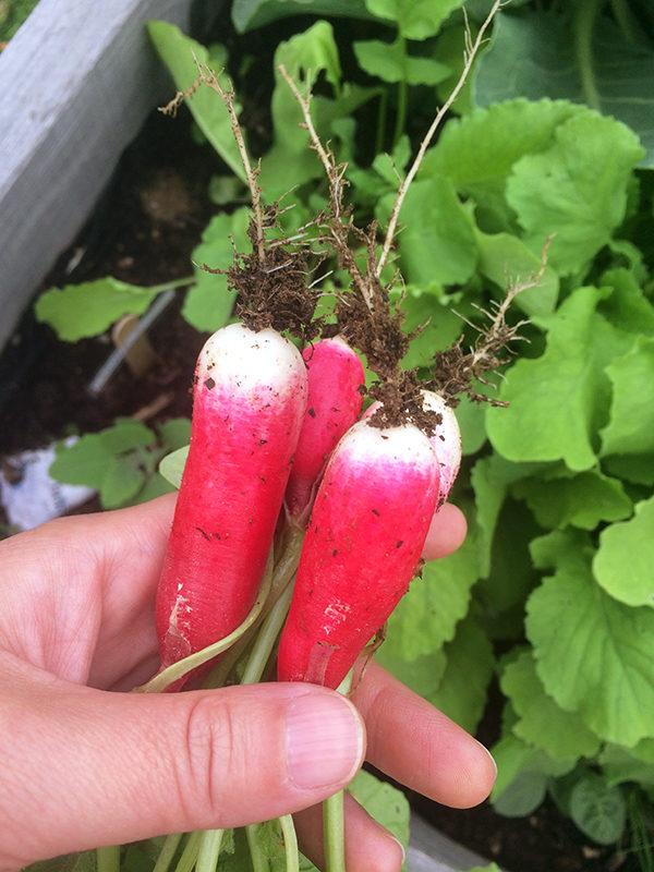 Weekend Farmers' Market Blogging: Week 4